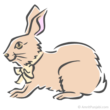 rabbit - khargosh
